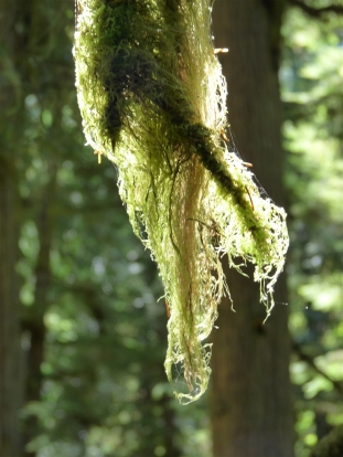 Moss grows everywhere in the temperate rainforest